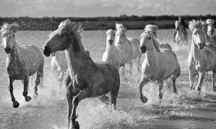 horses-2-750x450